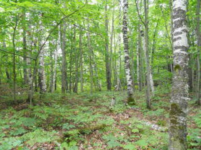 Birchwood Dr, Rogers City, 49779, MI - Photo 1 of 2