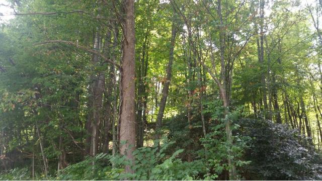 TBD Hwy 19, Roan Mountain, 37687, TN - Photo 1 of 20