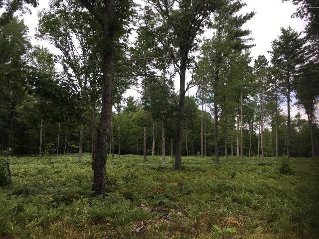 Peters Farm, Wellston, 49689, MI - Photo 1 of 7
