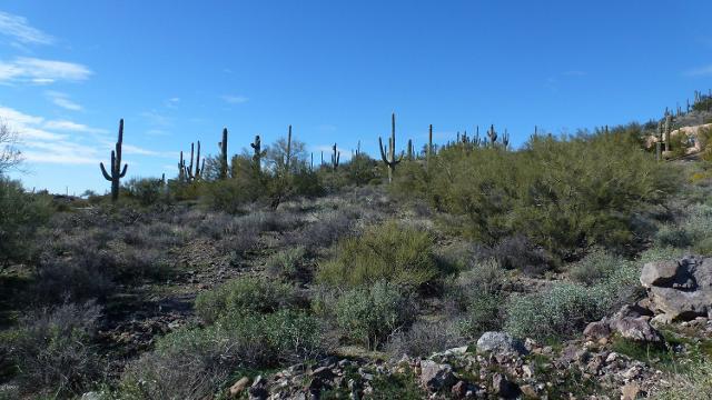 43308 11th, New River, 85087, AZ - Photo 1 of 33
