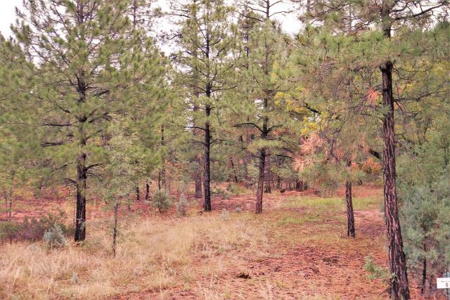 5921 Starlight Ridge Rd, Lakeside, 85929, AZ - Photo 1 of 6