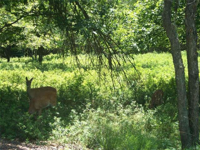 927 Tamarack Ter, Penn Forest Township, 18210, PA - Photo 1 of 2
