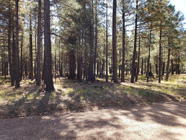 1019 Merzville Rd, Forest Lakes, 85931, AZ - Photo 1 of 1