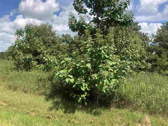 818 Mcmath Mill Rd, Americus, 31719, GA - Photo 1 of 2