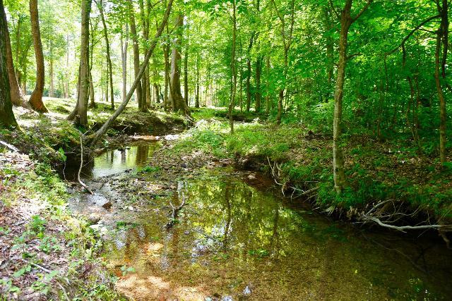 0 Barnesville, Summertown, 38483, TN - Photo 1 of 30