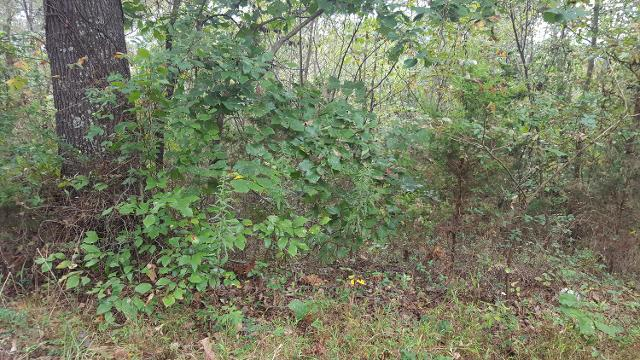 283 Davy Crockett Rd, Limestone, 37681, TN - Photo 1 of 1