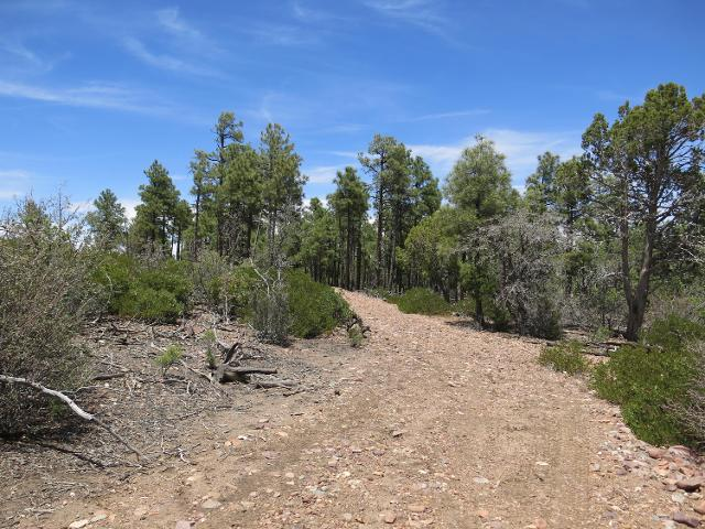 4305 Fs 139a Forest Servi Rd, Clay Springs, 85923, AZ - Photo 1 of 9