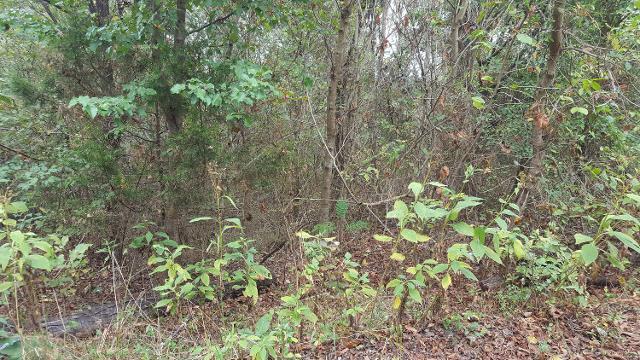 287 Davy Crockett Rd, Limestone, 37681, TN - Photo 1 of 1
