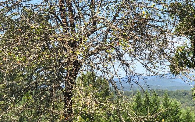 LT 33 Lakeview, Morganton, 30560, GA - Photo 1 of 8