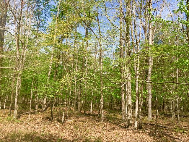 1 Chickory Ln, Monteagle, 37356, TN - Photo 1 of 1
