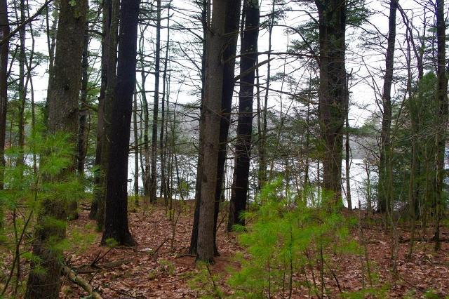 Lot 3 Mashapaug Rd, Holland, 01521, MA - Photo 1 of 6