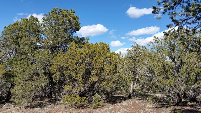 TBD Cr 8413 --, Vernon, 85940, AZ - Photo 1 of 7