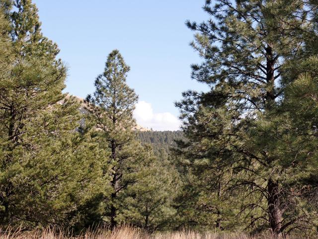 Lot 16 Red Cabin Ranch Ests Estates, Vernon, 85940, AZ - Photo 1 of 14